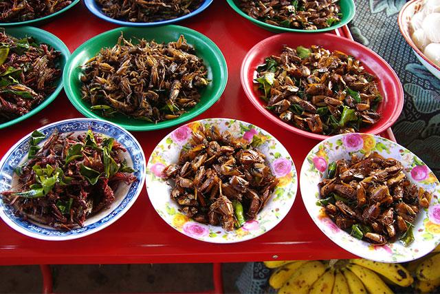 Comida-de-insectos2